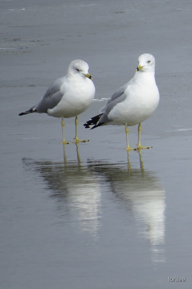 A Pair in Reflection by lorilee