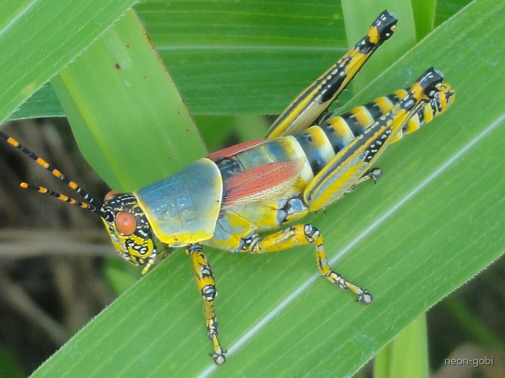 Colourful beauty Pest by neon-gobi