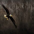 Grace In Flight by Jeff Weymier