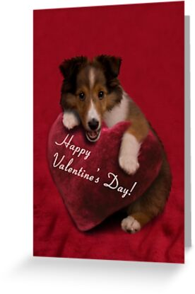 Valentine's Day Sheltie Puppy by jkartlife