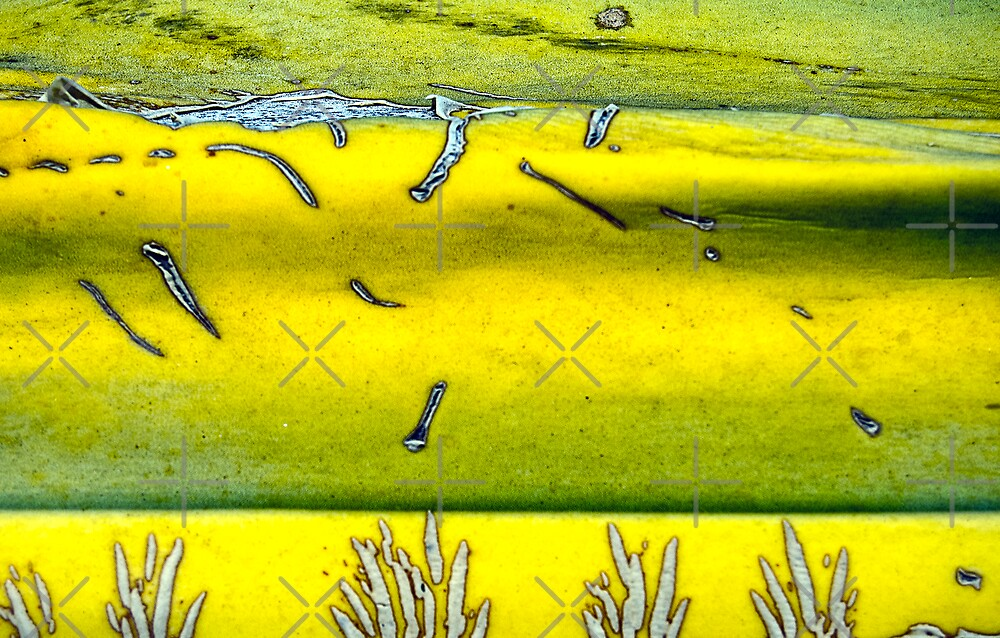 Splitch Splotch by Scott  Cook©