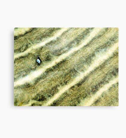 Sand and Shell Metal Print