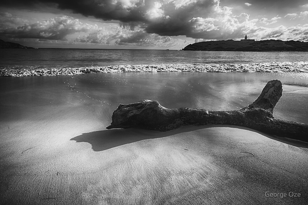 Driftwood on a  Beach by George Oze