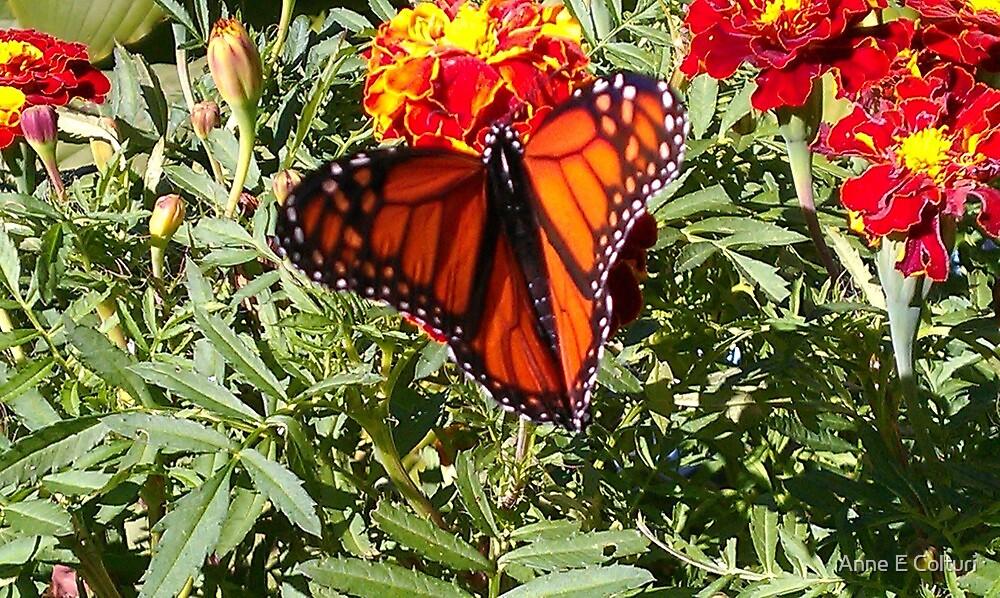 Majestic Monarch by Anne E Colturi