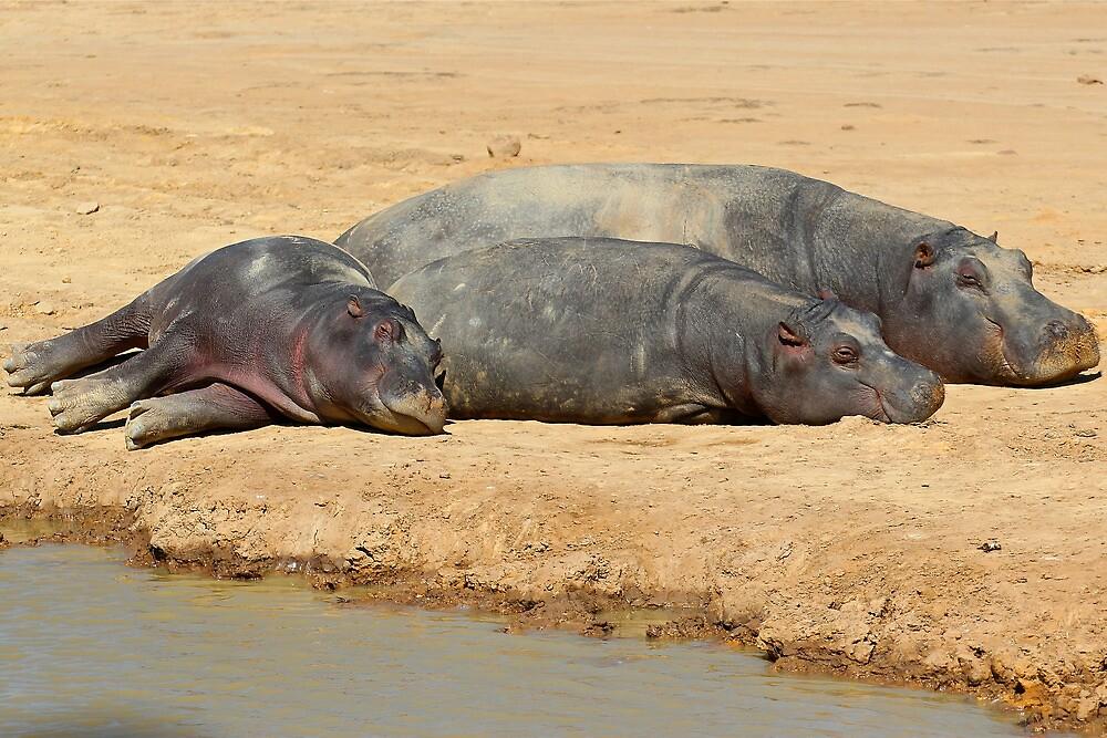 Hippo Family by EdPettitt
