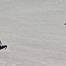 Penguin Disagreement! by EdPettitt