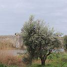 Single olive oil by parvmos