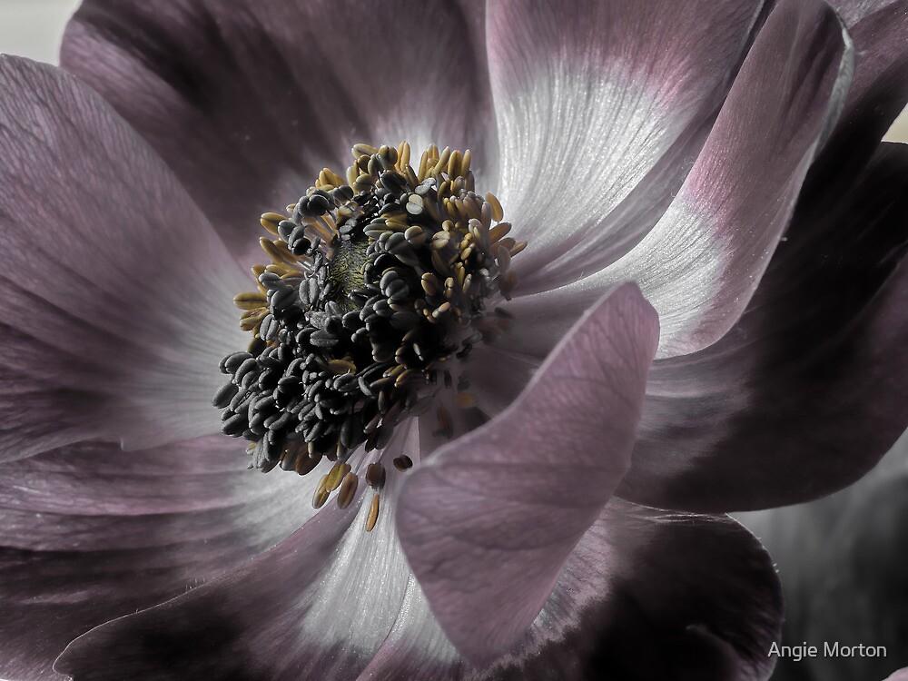 Magenta Anemone by Angie Morton