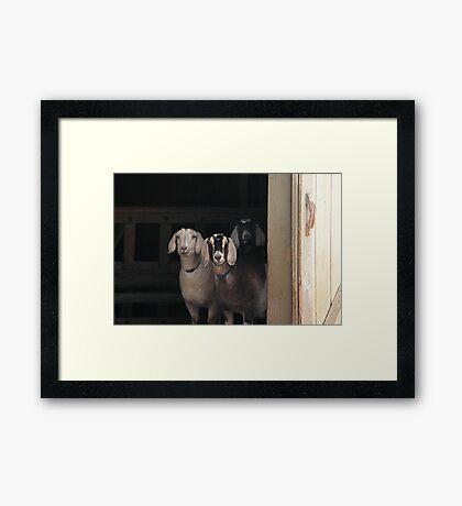Goats ~ Framed Print