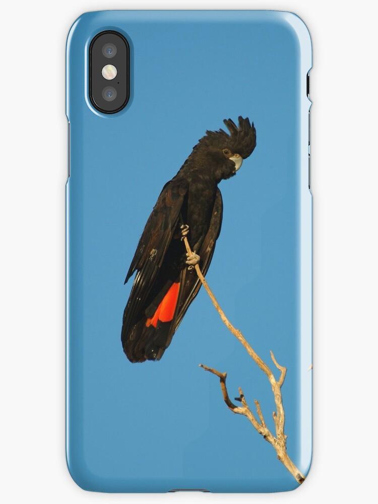 Red Tailed Black Cockatoo by Joe Mortelliti