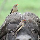 Friends !! by Anthony Goldman