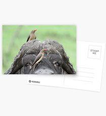 Friends !! Postcards