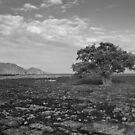 THE TREE IN THE OCEAN.  by HanselASolera