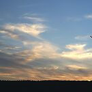 lone tree at sunset by kathybellingham