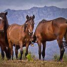 Horses by Soniris