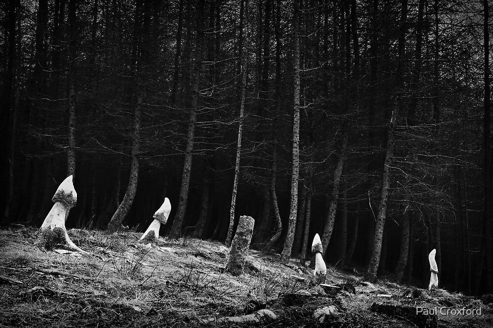 Blaen Bran (Coed Gwain Y Fferiad) - 013 B&W by Paul Croxford