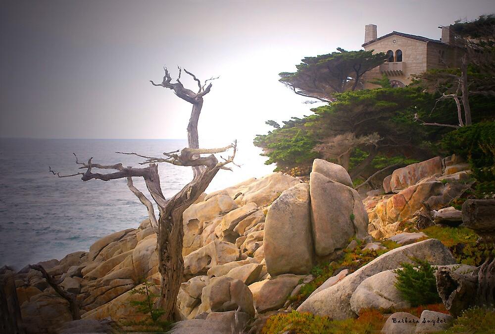 Ghost Tree 1 by BarbaraSnyder