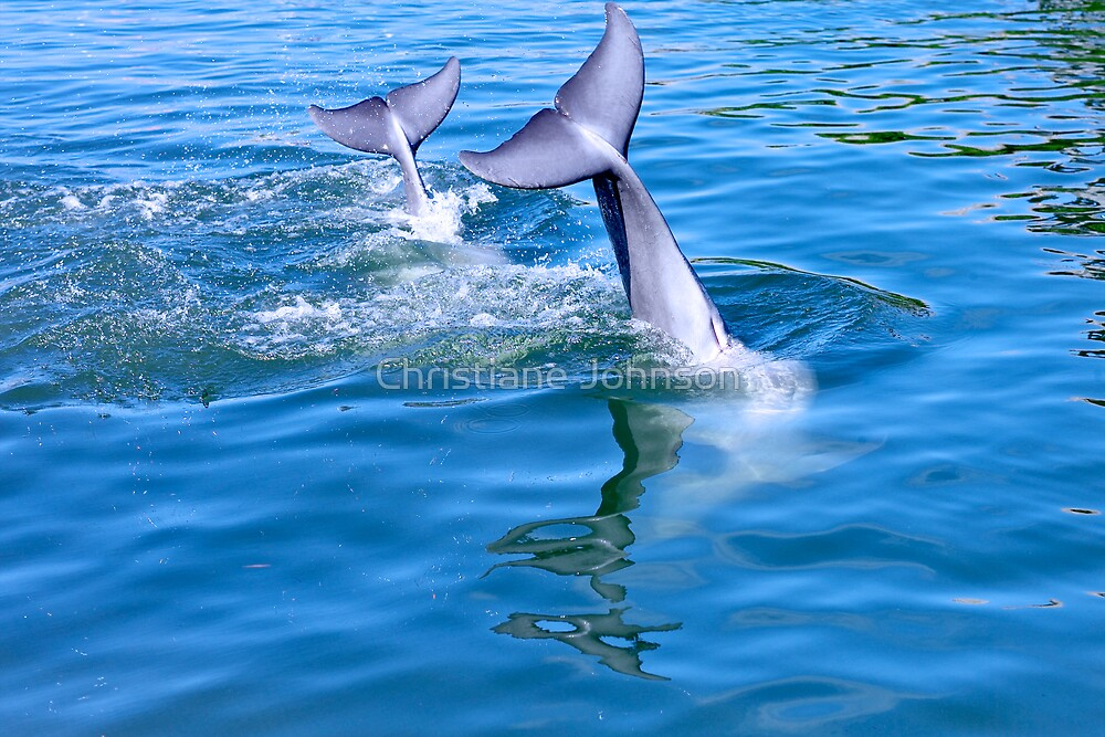 Dolphin tails by Christiane Johnson