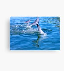 Dolphin tails Canvas Print