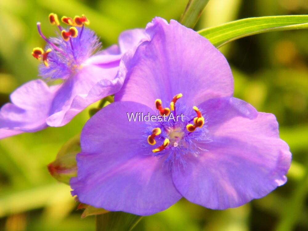 Spiderworts by WildestArt