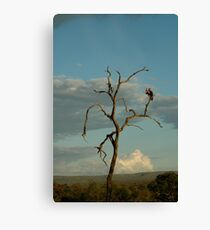 Am I the only one around here? Canvas Print