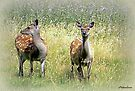 Roe Deer-Dorset by naturelover