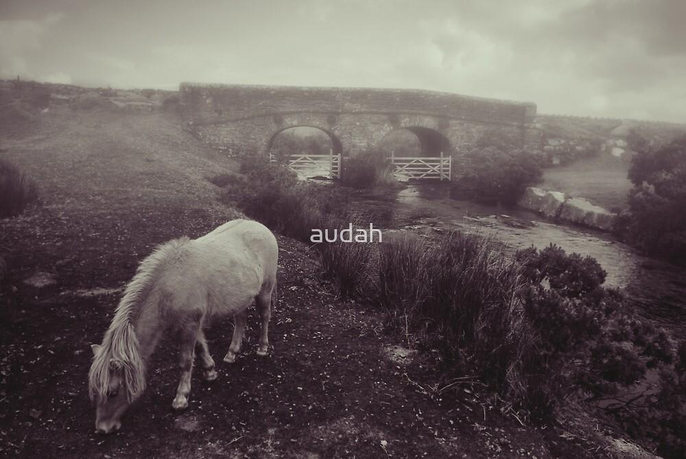 Foggy day in Dartmoor by audah