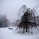 No one is in the Park today by Debra Fedchin