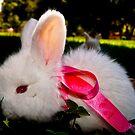 Bunnybow C by pcfyi