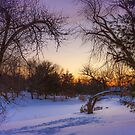 Dusk and snowfall by Owed To Nature
