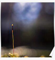 Moss Sporophyte Poster