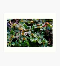 Fruiting Bodies Art Print
