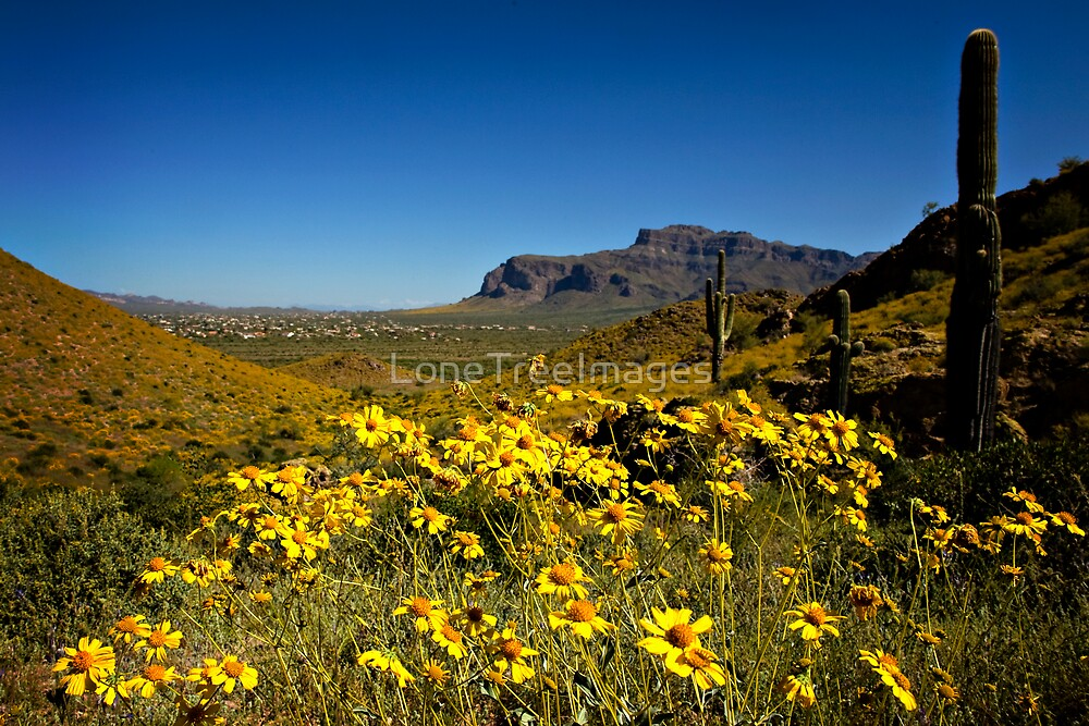 Spring View of the Superstition Mountains by LoneTreeImages
