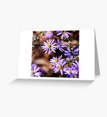 Aster Floral Design Greeting Card