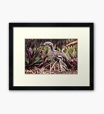 Bush Stone-curlew with Chick Framed Print