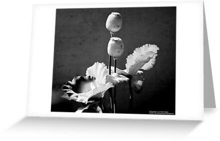 Black & White Flower Decor by Louis Delos Angeles