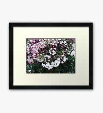 Beautiful Jasmine Flowers In Full Bloom Framed Print