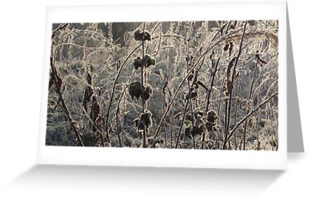 Frosty Fields by TheShutterbugsG