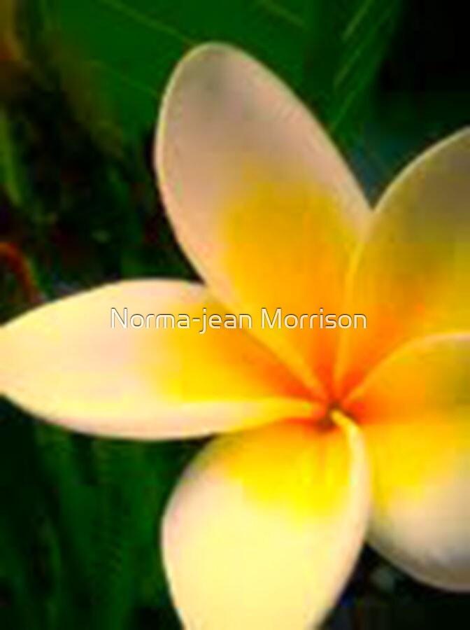 BEAUTY IN FLOWER by Norma-jean Morrison