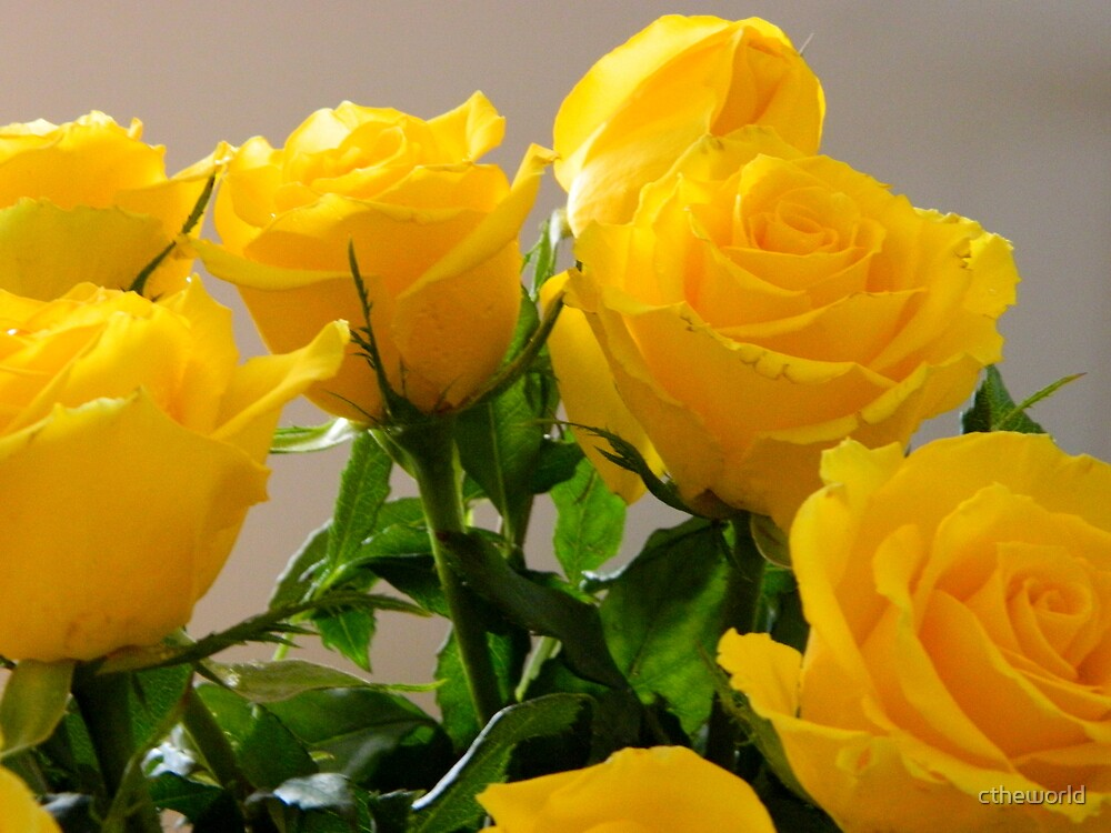 YELLOW ROSES - 2    ^ by ctheworld