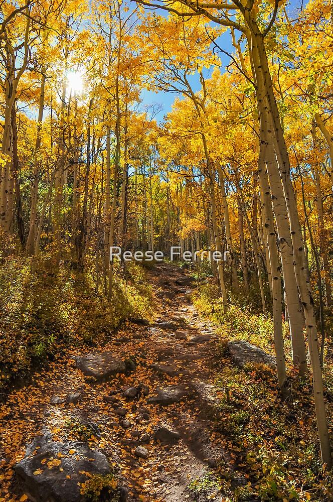 Ben Tyler Autumn Trail by Reese Ferrier