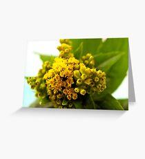 Golden Rod - Solidago Wild Flower  Greeting Card