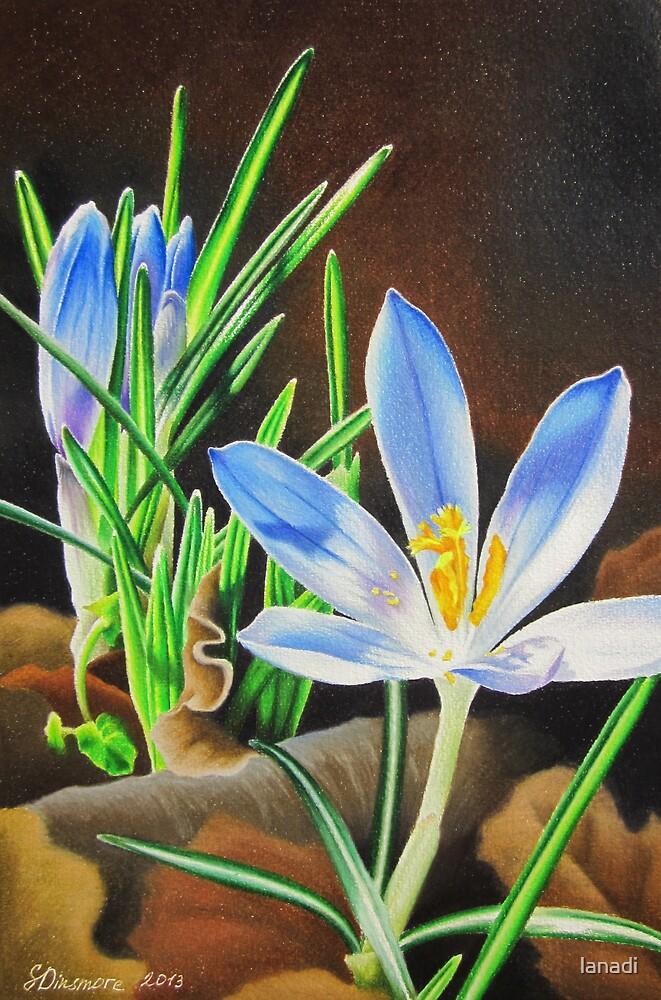 Spring Crocus by lanadi