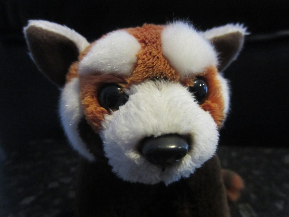 Adorable Red Panda by v-something