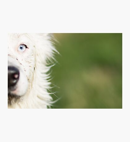 The bright side of Harrie Photographic Print
