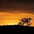 Summer Sunrise by BekJoy