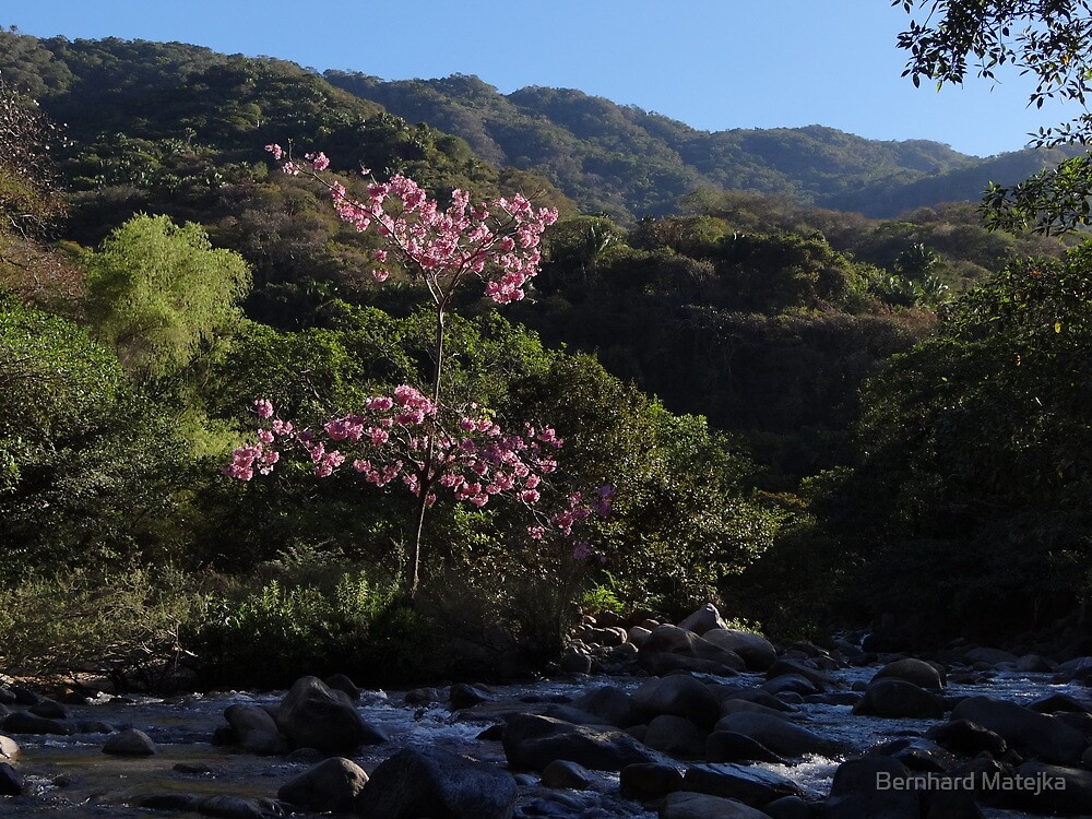 Occidental Sierra Madre  by Bernhard Matejka