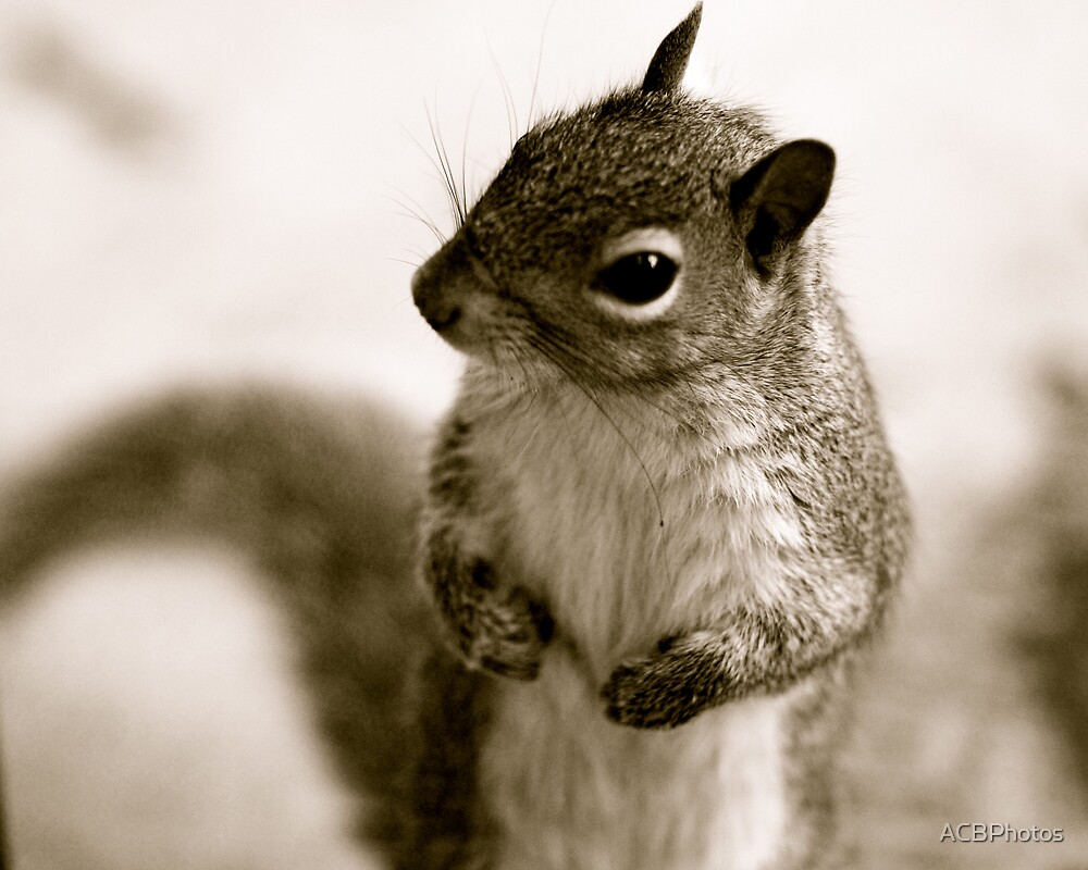 One Handsome Squirrel by ACBPhotos