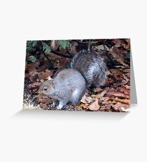 Coming down from my tree for dinner. Greeting Card