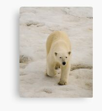 Ice Bear Canvas Print